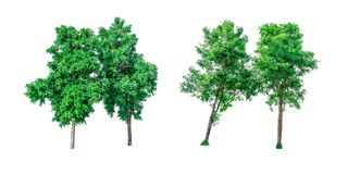 Collection of green trees isolated on white background. Royalty Free Stock Photos