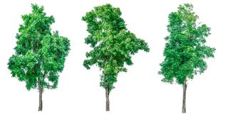 Collection of green trees isolated on white background. Stock Images