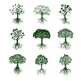 Collection of Green Trees and Roots. Vector Illustration. Stock Photos
