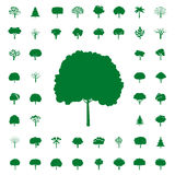 Collection of Green Trees. Vector icons. Royalty Free Stock Photography