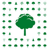 Collection of Green Trees. Vector icons. Stock Image