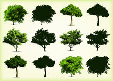 Collection green trees. Vector illustration Stock Photo