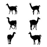 Collection of guanaco silhouettes Royalty Free Stock Photography
