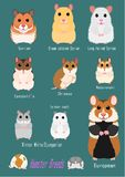 Collection of hamster breeds. Various breed, front side with breed name royalty free illustration