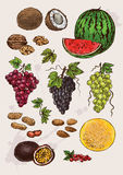 Collection of  hand drawing   fruits Royalty Free Stock Images