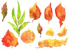Collection of hand drawing watercolor yellow autumn birch leaves royalty free illustration