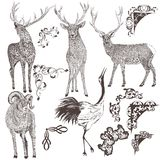 Collection of  hand drawn animals Royalty Free Stock Photos