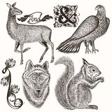 Collection of  hand drawn animals for hunting design Stock Image