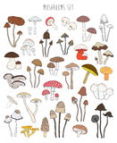 Collection of hand drawn colorful mushrooms. Set isolated edible Stock Photos