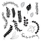 A collection of hand drawn delicate decorative vintage leaves  Stock Image