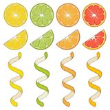 Collection of hand drawn elements, lemon. Grapefruit, orange, lime, slice and spiral. Objects for packaging, advertisements. Isolated image. Vector vector illustration