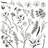 Vector Collection of Drawn Floral Design Elements. Collection of Hand Drawn Floral Design Elements. Branches and Flowers. Decorative Vector Illustration. Lily Royalty Free Stock Images