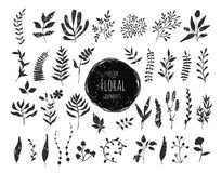 Collection of hand drawn floral elements Stock Photography