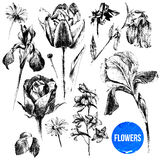 Collection of hand drawn flowers Royalty Free Stock Photo