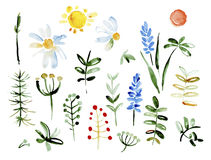 Collection of hand drawn flowers. Elements for Stock Photos