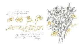 Collection of hand drawn flowers and herbs. Botanical plant illustration. Card template on romantic background. Graphic. Illustration. Handwritten abstract text royalty free illustration