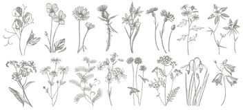 Collection of hand drawn flowers and herbs. Botanical plant illustration. Vintage medicinal herbs sketch set of ink hand. Drawn medical herbs and plants sketch vector illustration