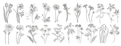 Collection of hand drawn flowers and herbs. Botanical plant illustration. Vintage medicinal herbs sketch set of ink hand. Drawn medical herbs and plants sketch royalty free illustration