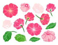 Collection of hand drawn flowers and leaves Royalty Free Stock Photos