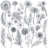 Collection of hand drawn flowers and plants Royalty Free Stock Photography