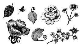 Collection of hand drawn ink flowers and leaves Royalty Free Stock Image