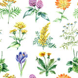 Collection of hand drawn medical herbs and plants. seamless pattern Royalty Free Stock Images