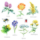 Collection of hand drawn medical herbs and plants. Stock Photography