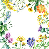 Collection of hand drawn medical herbs and plants. vector illustration