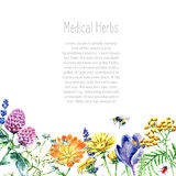 Collection of hand drawn medical herbs and plants. Stock Images