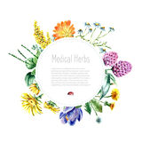 Collection of hand drawn medical herbs and plants. Royalty Free Stock Image