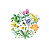 Collection of hand drawn medical herbs and plants. stock illustration