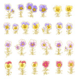 Collection of hand-drawn pansy. Isolated on white Royalty Free Stock Image