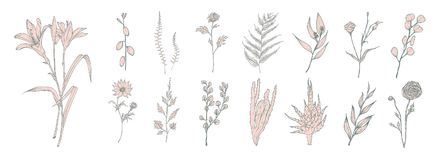 Collection of hand drawn pink flowers, ferns and succulent isolated on white background. Bundle of botanical drawings of. Elegant wild plants, floral Stock Photo