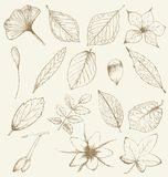 Collection of hand drawn plants Stock Photography