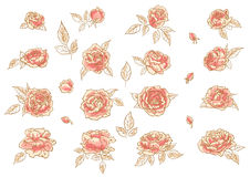 Collection of hand-drawn roses. Collection of 16 hand-drawn pink roses Royalty Free Stock Photos