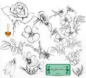 Collection of hand drawn roses for design. Floral vintage vector Stock Photos