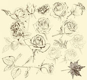 Collection of hand drawn roses for design. Set of vector detailed hand drawn roses. Floral vintage vector Royalty Free Stock Images