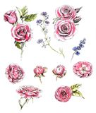 Collection of the hand-drawn roses and floral elements. Line art and watercolor. Set of the different flowers for floral compositions, decoration Royalty Free Stock Image