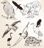 Collection of hand drawn vector detailed animals for design Royalty Free Stock Photos