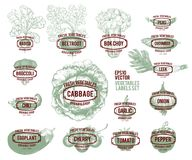 Collection of hand drawn vegetable illustrations, vector illustration in vintage style. Labels with various vegetables stock illustration