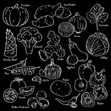 Collection of hand-drawn vegetables and spices. Collection of hand-drawn vegetables and spices in black background Royalty Free Stock Photos