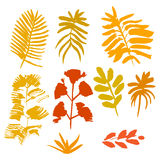 Collection of hand drawn yellow leafs. Collection of hand drawn ink yellow leafs royalty free illustration