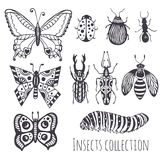 Collection of hand insects,  Cute set of decoration for design, icons, logo or print. Vector illustration. Royalty Free Stock Images