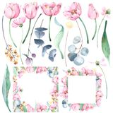 Set of hand painted floral watercolor illustrations and botanical frames with tulips, eucalyptus, wild flowers, brunches ans leave. Collection of hand painted stock illustration