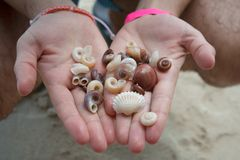 Collection of handpicked sea shells in man hands stock images