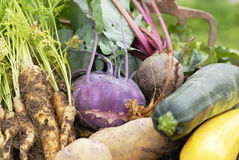 Collection of harvested vegetables. Royalty Free Stock Photos