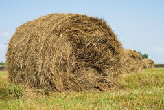 Collection of hay in bales. Bales of hay in the summer pastures Stock Photo