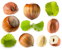 Collection of hazelnuts isolated on the white background Stock Photo