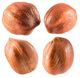 Collection of hazelnuts isolated on the white background Royalty Free Stock Image