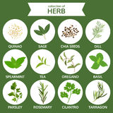 Collection of herb, food vector, flat icon set Royalty Free Stock Photos